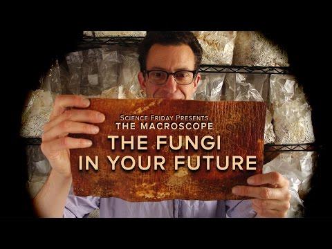 The Fungi in Your Future