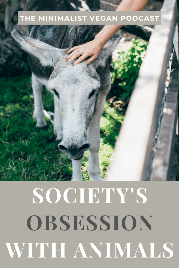 Society's Obsession With Animals