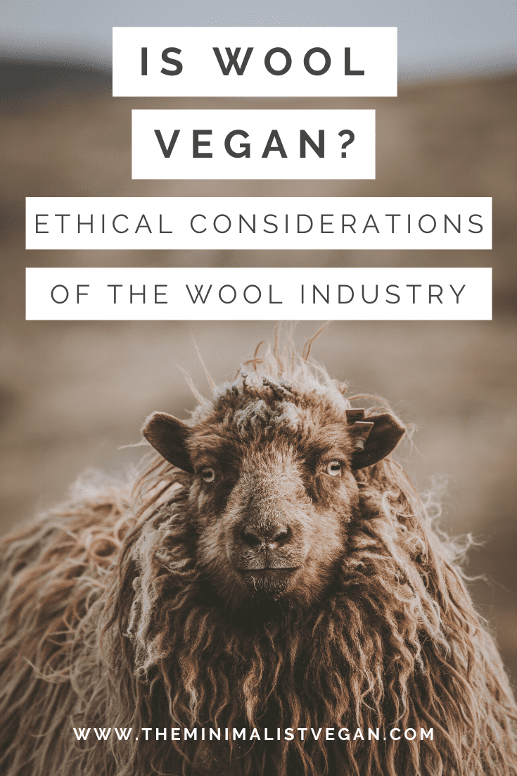 Is Wool Vegan? Ethical Considerations of The Wool Industry