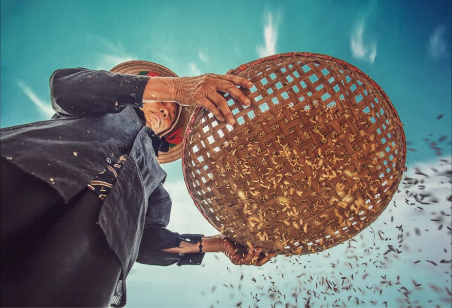 Person sieving through rice grains.