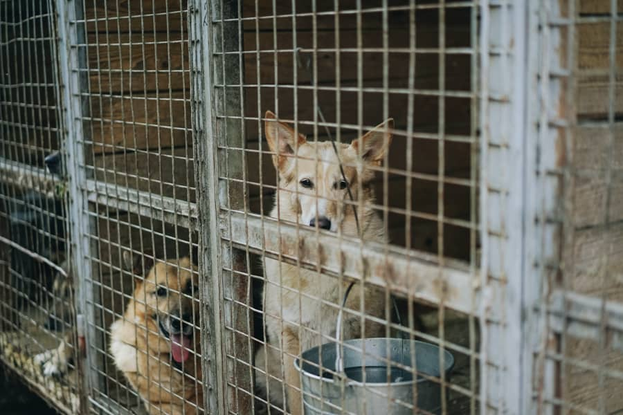 Dogs behind a cage in a shelter.